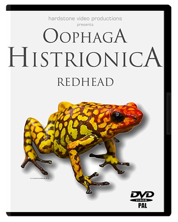 Oophaga histrionica